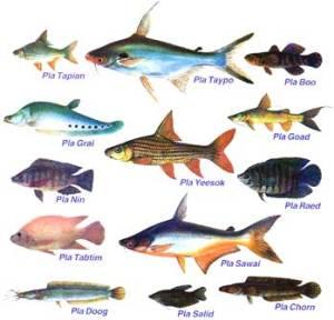 popular_fish